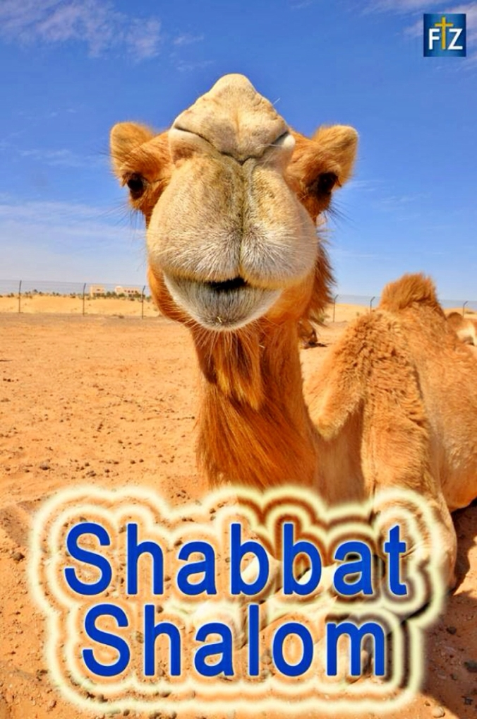 Shabbat158